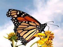 fjärilsfärgnatur Arkivbild