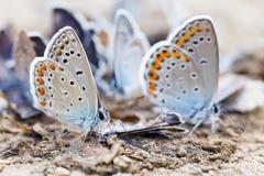 Fjärilsfamilj Royaltyfri Fotografi