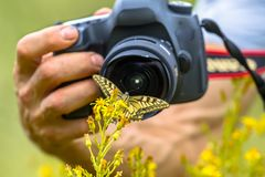 Fjärilsfotografi Royaltyfri Bild