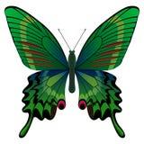 fjärilsgreen Arkivbilder