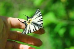 fjärilshand Arkivfoton