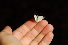 fjärilshand Royaltyfri Fotografi