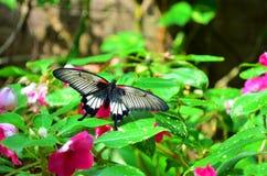 Fjärilshus av villan Garzoni - Lucca, Italien Arkivbilder