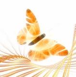 fjärilsillustration Royaltyfri Foto