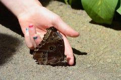 Fjärilskrypning på fingret Royaltyfri Bild