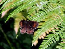 fjärilslövverk Arkivfoto