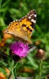 fjärilsladyen målade Arkivbild