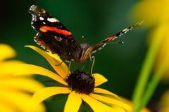 fjärilsladyen målade Royaltyfri Bild