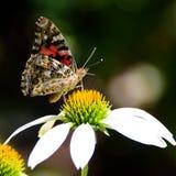 fjärilsladyen målade Arkivfoto