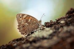 Fjärilslandning på ett träd Royaltyfri Bild