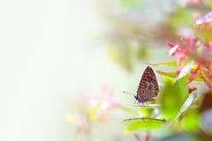 fjärilsleaf Royaltyfri Bild