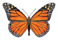 fjärilsmonark stock illustrationer