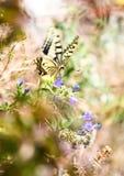fjärilsmonarkfjäder royaltyfria bilder