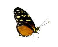 fjärilsobjektfoto Arkivbilder