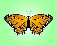 fjärilsorange Arkivbild