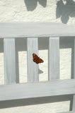 fjärilspåfågel Arkivfoto