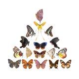 fjärilssamlingspyramid vektor illustrationer