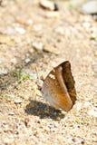 fjärilssand Royaltyfria Bilder