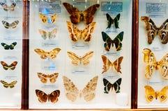Fjärilsskärm i naturhistoriamuseum arkivfoton