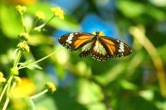 fjärilssun Royaltyfri Bild