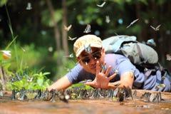 Fjärilssvärmen äter mineraler Royaltyfri Foto