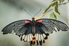 Fjärilstecken av frihet Arkivfoto