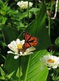 Fjärilsträdgård Arkivfoto