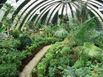 Fjärilsträdgård royaltyfri fotografi