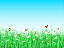 fjärilstusenskönor Fotografering för Bildbyråer