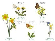Fjärilsuppsättning - på gula blommor vektor illustrationer