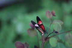 FjärilsvärldsFlorida fjäril med grön magisk bacground royaltyfria bilder