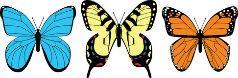 fjärilsvariation Arkivfoton