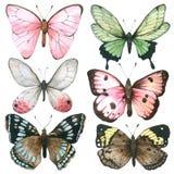 Fjärilsvattenfärgsamlingen som isolerades på vit bakgrund, den drog uppsättningen av fjärilshanden, målade för hälsningkortet, ta vektor illustrationer