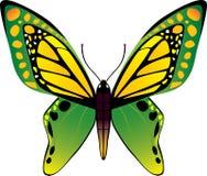 fjärilsvektor Royaltyfri Bild