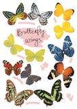 Fjärilsvinguppsättning i verkligt format Arkivbild