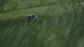 Fjärrkontrollsurr på ett fält som är klart för tagande av arkivfilmer