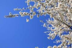 Fj?dra den blomma treen royaltyfria foton