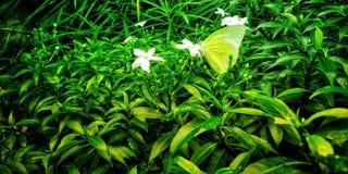 Fj?ril p? blomma royaltyfria foton