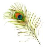 fjäderpåfågel Royaltyfri Bild