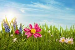 Fjädra blommor Arkivfoto
