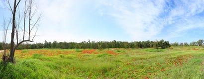 Fjädra blomning Arkivbilder