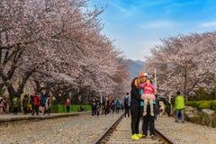 Fjädra festivalen för den körsbärsröda blomningen, Jinhae, Sydkorea Royaltyfri Fotografi
