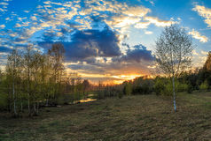 Fjädra landskapet, den mångfärgade solnedgången, de unga björkarna Royaltyfria Bilder