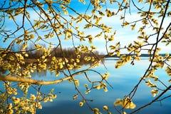 Fjädra landskapet med ett blomstra träd och floden Royaltyfri Foto