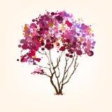 Fjädra treen av plumpbakgrund Arkivfoto
