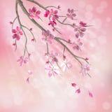 Fjädra vektortreen förgrena sig körsbärsröda blomningblommor Arkivfoton