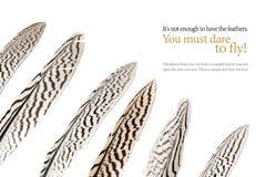 Fjädrar med svarta band som isoleras på vit, tar prov text Royaltyfri Bild