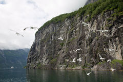 Fjord Flight Royalty Free Stock Photography