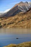 fjord franz greenland joseph Royaltyfri Fotografi