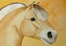Fjord horse painting. A watercolor painting of a norvegian fjord horse, orange background. Painted by the photographer Royalty Free Stock Photography